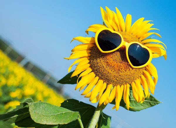 Güneş gözlüğü seçerken dikkat etmeniz gereken unsurlar