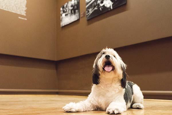 Bu sergiyi köpeğinizle ziyaret edebilirsiniz