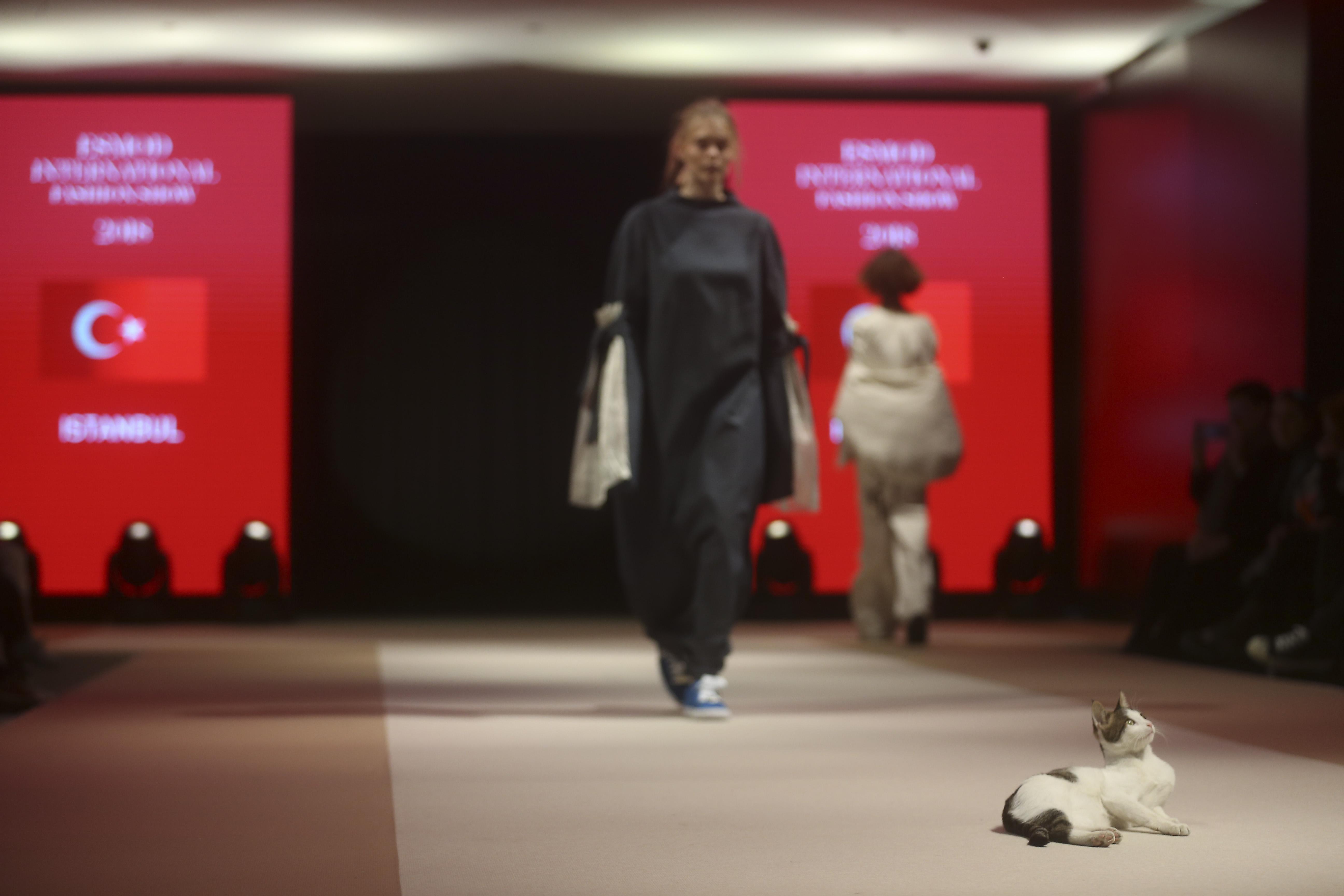 VAKKO ESMOD defilesinde 'Catwalk' yapan kedi!