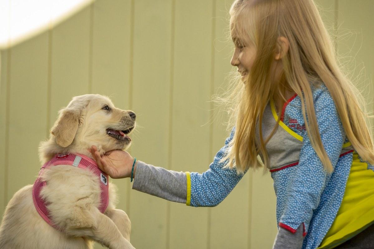 Köpeğinizle iletişimi kuvvetlendirecek 7 önemli ipuçları açıklandı!